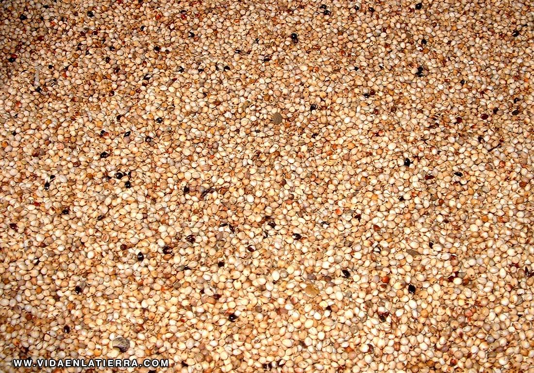 El Mijo perla
