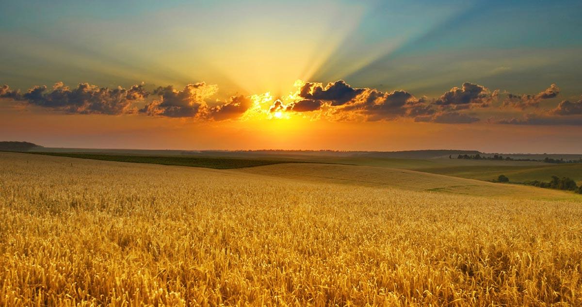Зеленеющие поля, посевная, Днепр и мосты Киева: весна в Украине с высоты птичьего полета - Цензор.НЕТ 8916