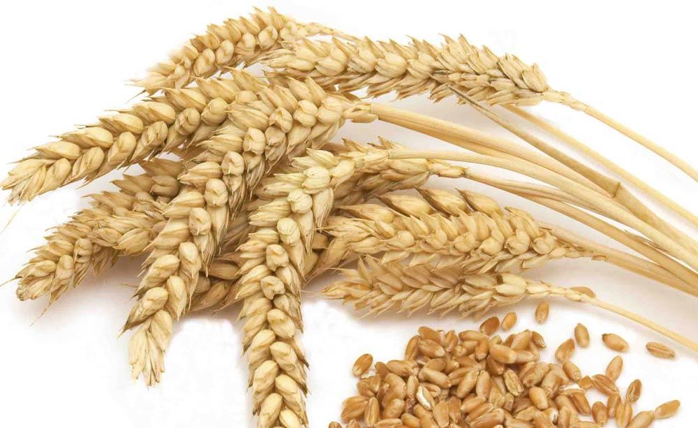Espigas y trigo